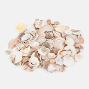 Muscheln aus dem Meer 1 kg