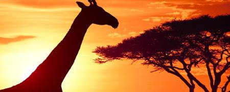 Deko Afrika